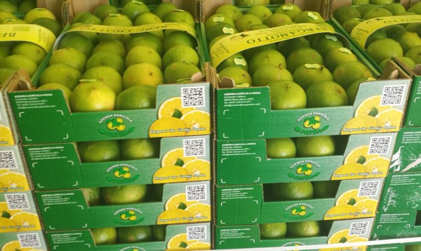 Il bergamotto agrume calabrese più pregiato al mondo