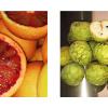 Annona, Arancia Rossa –  Nuovi prodotti in arrivo