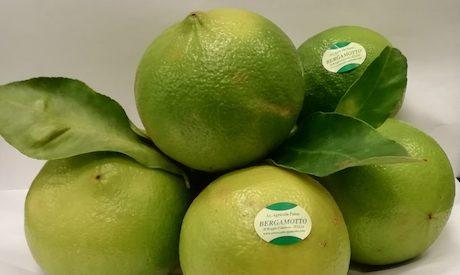 Frutto fresco BERGAMOTTO DI REGGIO CALABRIA –  inizia la campagna di raccolta 2020-2021
